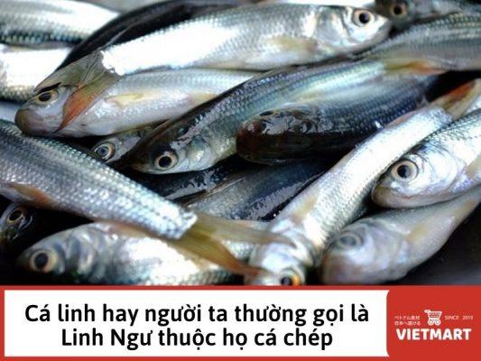 Mắm cá linh - Thực phẩm & Gia vị Việt Nam tại Nhật Bản