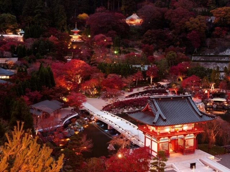 Thế giới đêm đầy bí ẩn và tràn ngập ánh sáng ở chùa Katsuoji