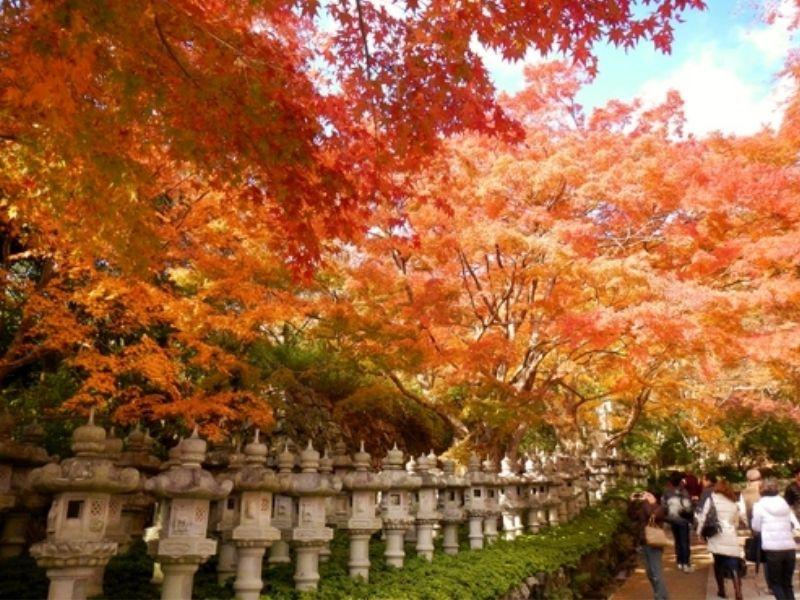 Mùa lá đỏ ở chùa Katsuoji đẹp tựa tranh vẽ