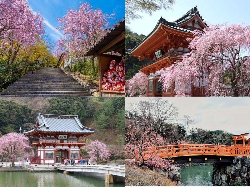 chùa Katsuoji mùa hoa anh đào